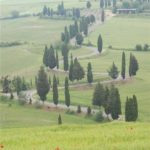 Winding Road at Monticchiello